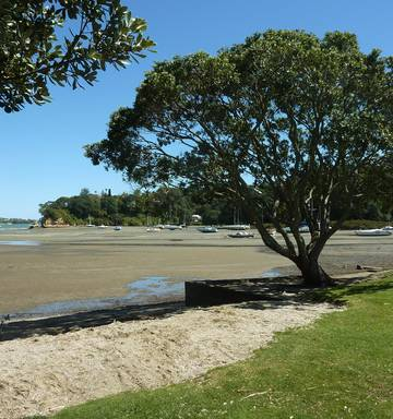 Auckland Council wants to encourage freedom camping at