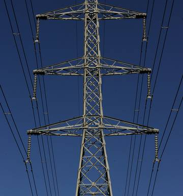 Large bird nests force four hour power cut to Waikato towns