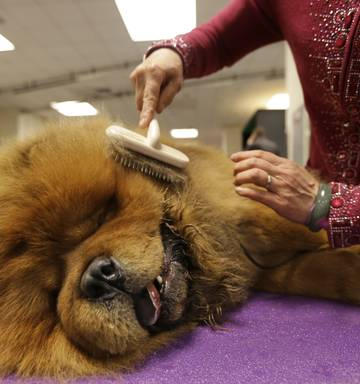 World S Most Pampered Pooches Photos Nz Herald