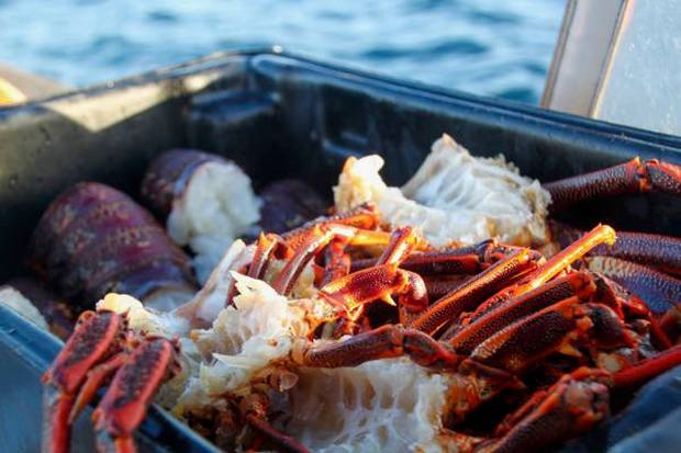 Days on Dusky Sound with Pure Salt involve conservation, relaxation, and freshly-caught crayfish. Photo / Jane Jeffries
