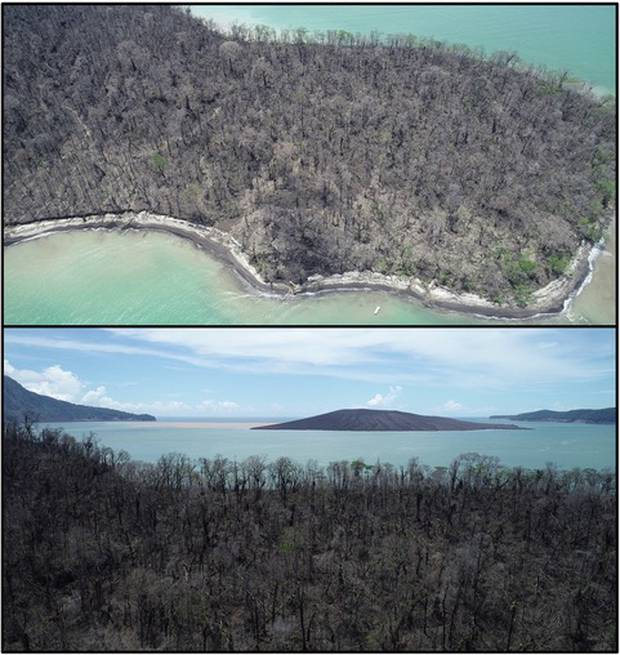 This dead forest on Panjang Island, to the north east of the Anak Krakatau volcano, shows some of the impact left by the tsunami. Photo / Jose Borrero