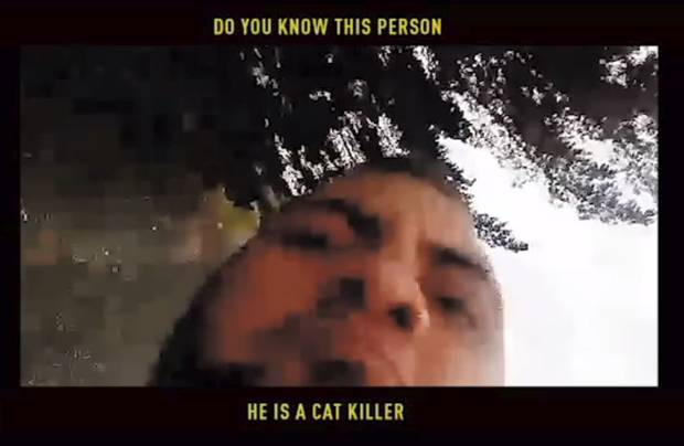 Paw Justice has this video in attempt to identify a man who stomps a kitten to death. Photo / Paw Justice