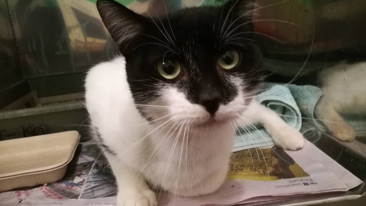 Whangarei S Spca Cats Ready For Adoption As Lockdown Rules Relax Nz Herald