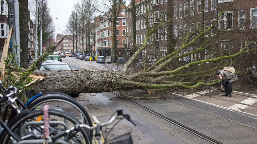 Storm damage to cost Germany 500 mln euros as death toll rises