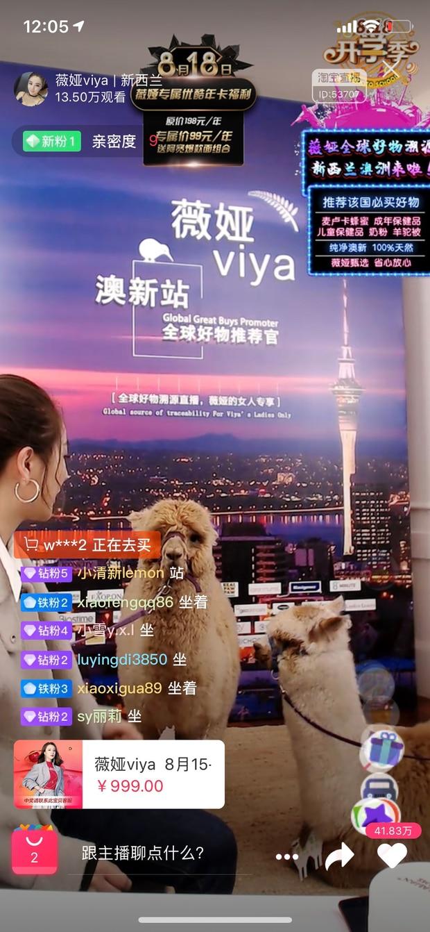 A screenshot of Viya during her livestream on Friday, featuring an alpaca. Photo / Screen shot