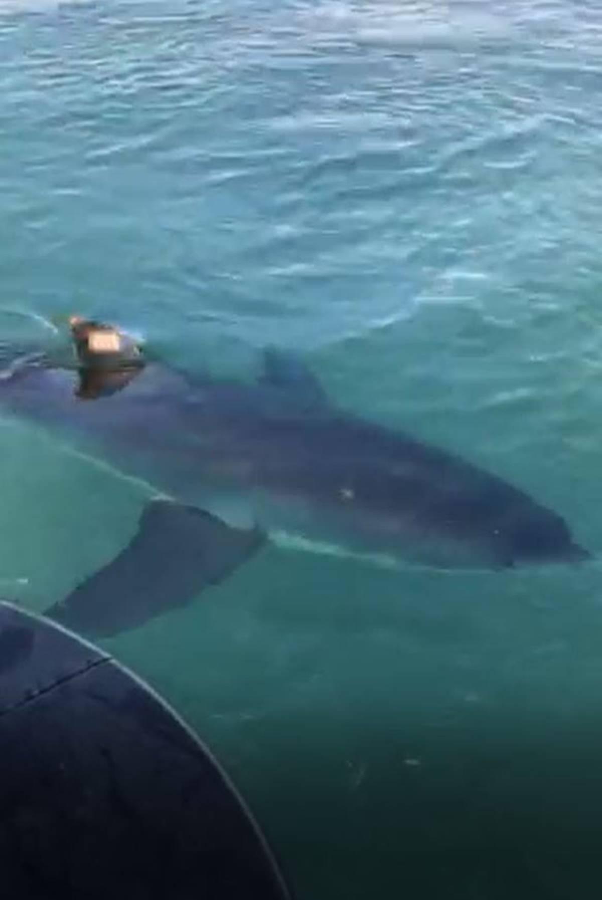 Great white shark encounter stuns Bay of Plenty fishermen