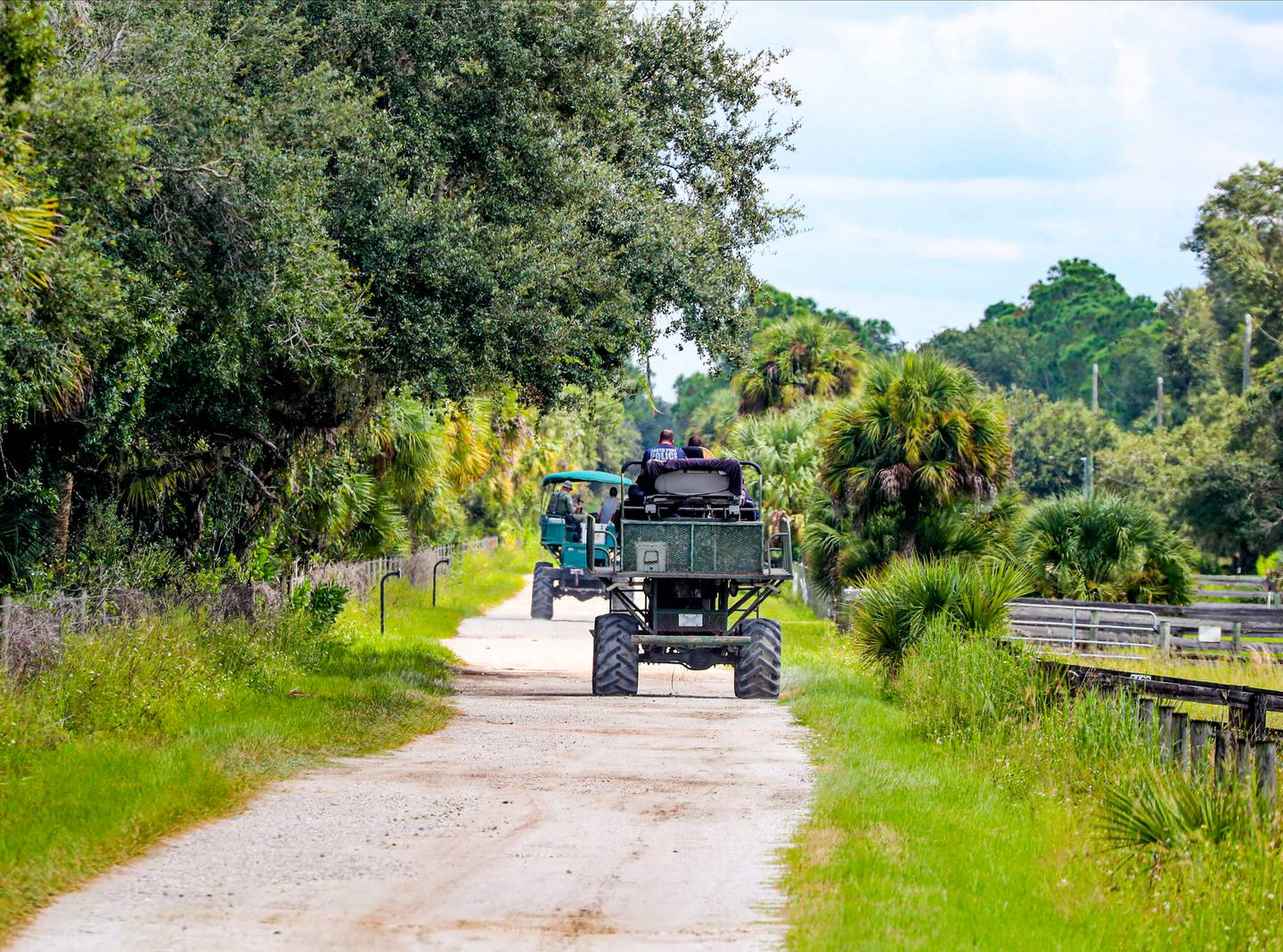 Law enforcement drive swamp buggies down a dirt road on the Southside of the Carlton Reserve, as they search for any signs of Brian Laundrie. Photo / AP