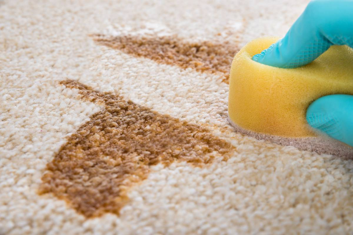 South Auckland house trashed by nightmare tenants who left 'urine saturated' carpet
