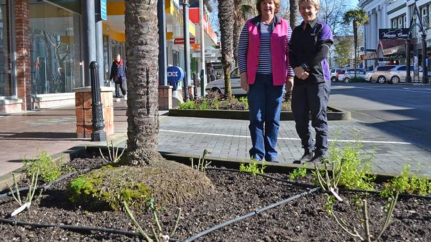 Cath Matthews (left) and Julie Heathcote with some of the freshly planted roses. PICTURE / PAUL BROOKS