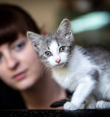 Kitten's miraculous survival after being thrown from moving