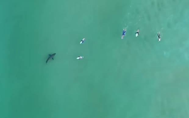 Chilling drone footage caught a shark stalking surfers who had no idea it was metres away.