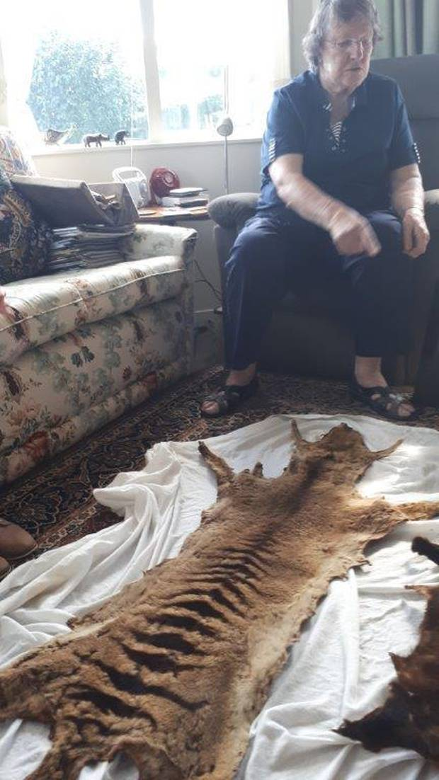 Janet Withers' Tasmanian tiger skin preserved the animal's distinctive tiger-like stripes. Photo / Supplied